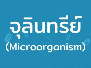 จุลินทรีย์ (Microorganism) สิ่งมีชีวิตขนาดเล็ก มีทั้งดีและไม่ดี พบเจอได้ในสภาพแวดล้อมต่างๆ