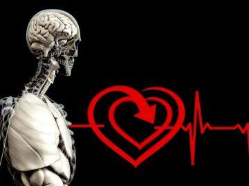 ไกลโคเจน (Glycogen) พบได้ในตับและในเลือด นำไปใช้เป็นพลังงานสำรองให้กับร่างกาย