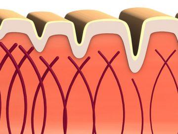 คอลลาเจน (Collagen) เสริมสร้างความแข็งแรง และความยืดหยุ่นให้ผิวหนังและอวัยวะ
