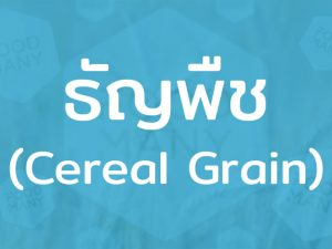 ธัญพืช (Cereal Grain) ข้าวและถั่วงา เป็นอาหารที่ให้พลังงานต่อร่างกาย มีคุณค่าทางโภชนาการสูง